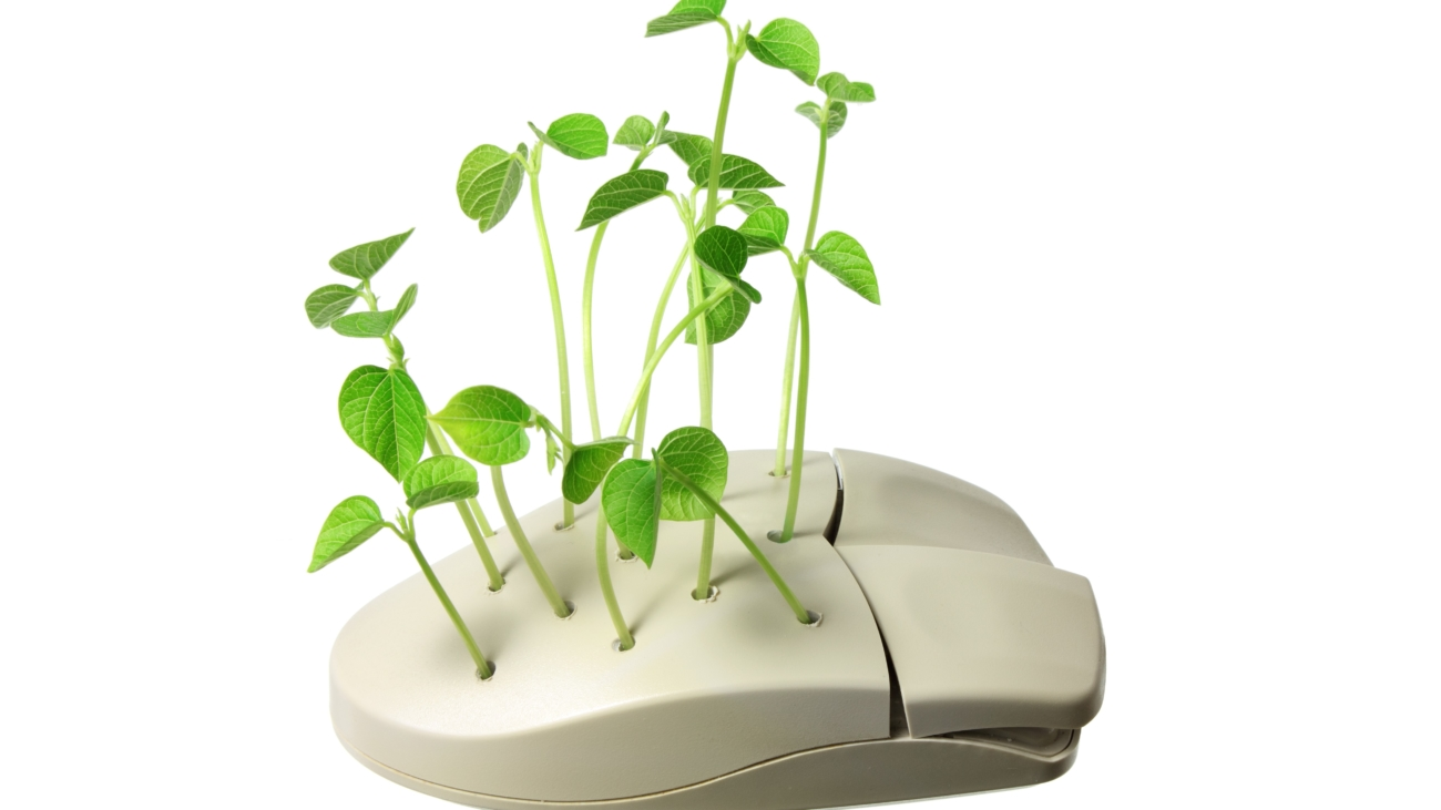 Computer Mouse with Sprouts on White Background